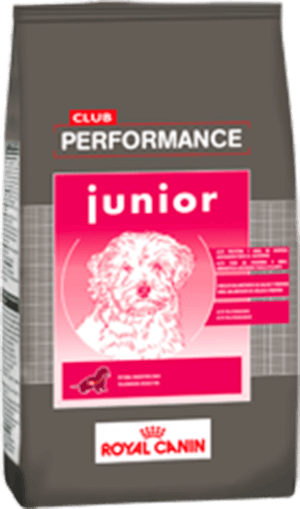 Club Performance  Perro Cachorro (Junior)